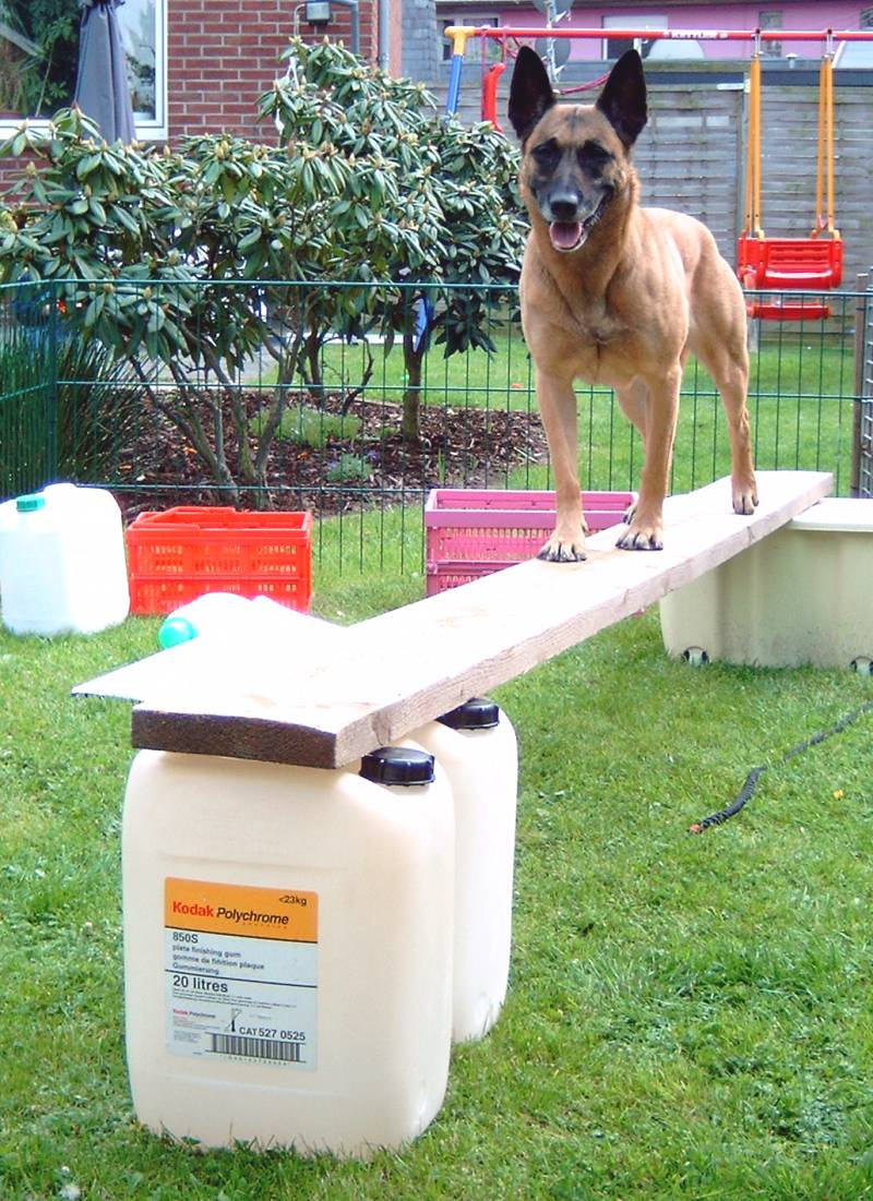 Hunde pool selber bauen pool selber bauen pooldeck selber for Hunde pool bauen